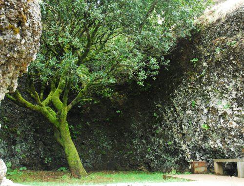 Árbol Garoé
